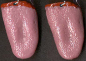 Body Parts Huge GROSS TONGUE DANGLE EARRINGS - Creepy Halloween Realistic 3-D Freaky Gothic Costume Jewelry